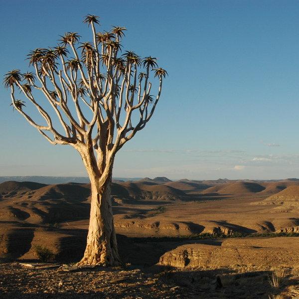 Skeleton Coast Namibia >> 688 pictures of holidays in Namib-Naukluft N.P. | Namibia